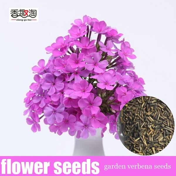 100 pcs jardin verveine graines de fleurs, Balcon plantes ...