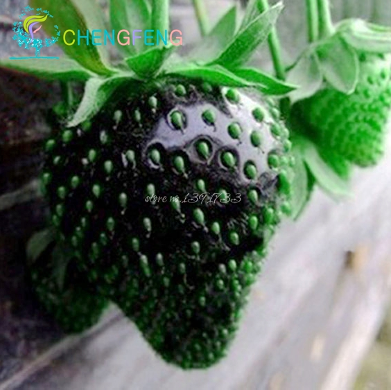 100pcs Strawberry Seeds Direct Ing Indoor Plants Rare Color Seed Fruit Home Garden Diy Bonsai Flowering In From