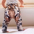 2016 Fashion Hip Hop Baby Casual Pants Tiger Pattern Toddler Trousers 0-2Year Children Harem Pants High Quality Kids Clothes