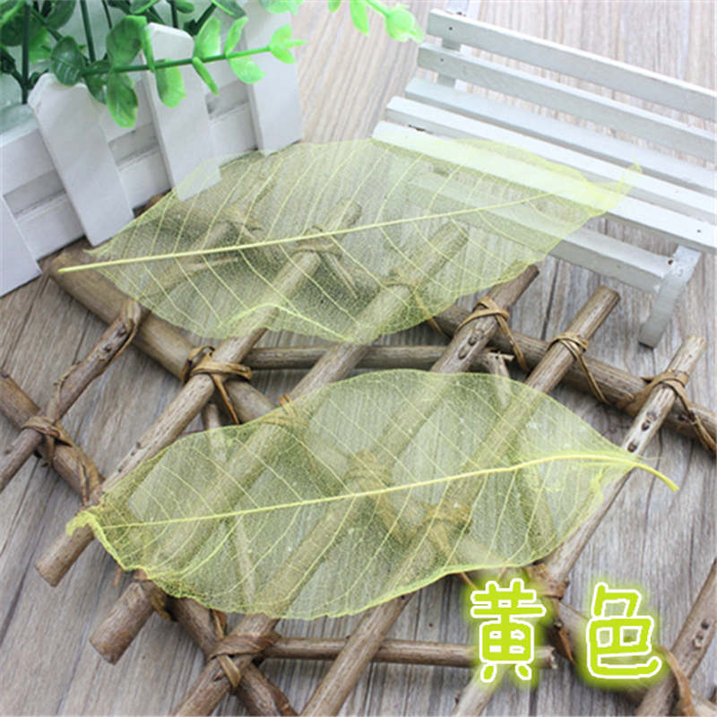 Free shipping ZAKKA shooting furnishings forest natural dry flowers natural magnolia leaf specimens 50pcs in Artificial Dried Flowers from Home Garden