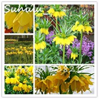 20-Rare-Yellow-Imperial-Crown-Seeds-Beautiful-Fritillaria-imperialis-Lutea-Seeds-Easy-To-Grow-Home-Garden.jpg_200x200