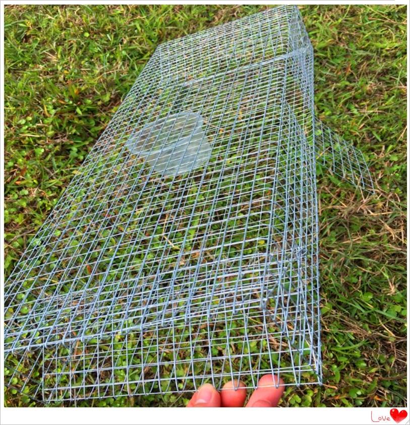 Live Catch Hoge kwaliteit Snake trap / Oxyuranus Microlepidotus val - Jacht