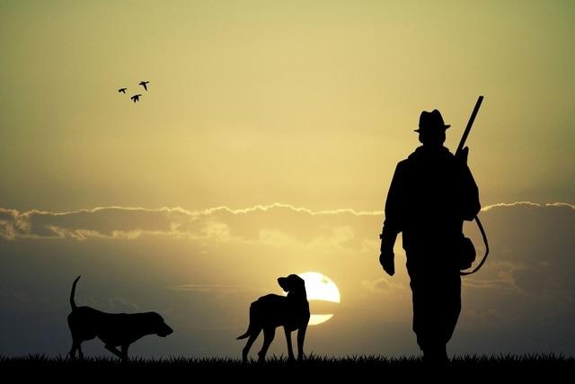 Hunter dogs sunset sky nature landscapes birds human nature KD160 ...