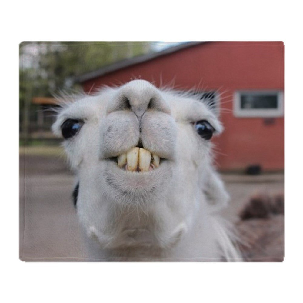 Funny Alpaca Llama Soft Fleece Throw Blanket Fleece Super ...