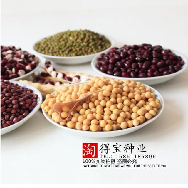 Vegetable Garden Seeds Broad Bean Seeds High Yield Peas Green