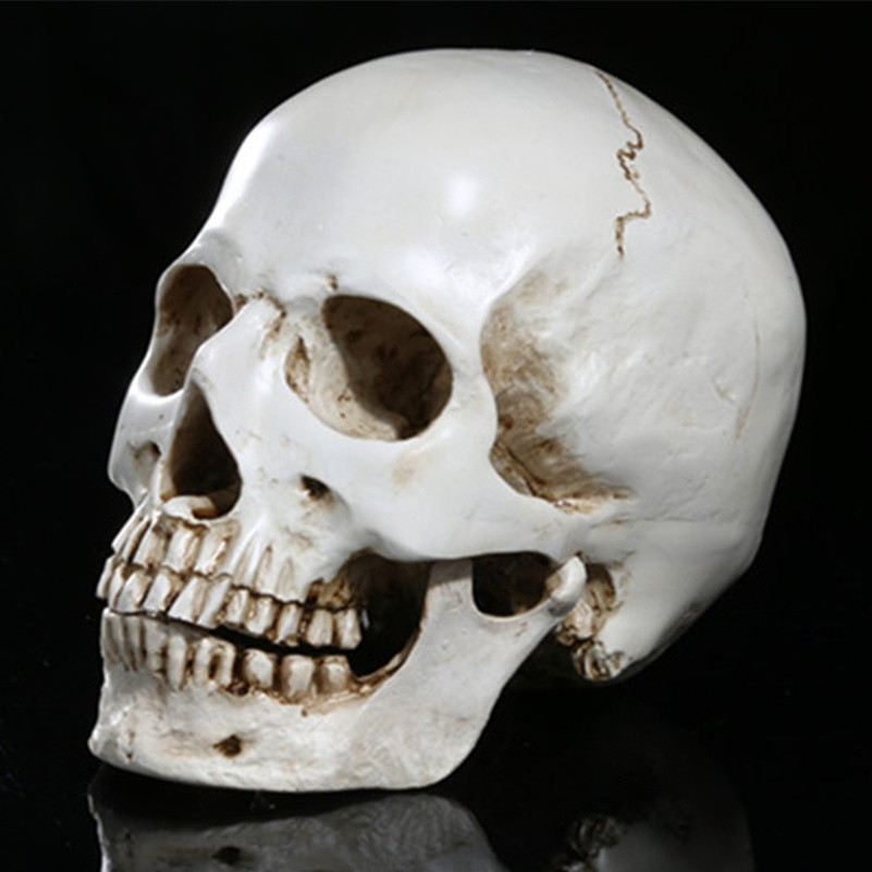 US $9 01 8% OFF|Medical Teaching Skull Separable Skeleton Head Resin  Simulation Skeleton Head Halloween Props Skull Home Furnishing Ornaments-in