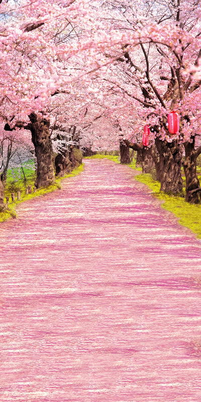 10X20ft Romantic pink road trees wedding vinyl photography backdrop newborn computer print background for photo studio