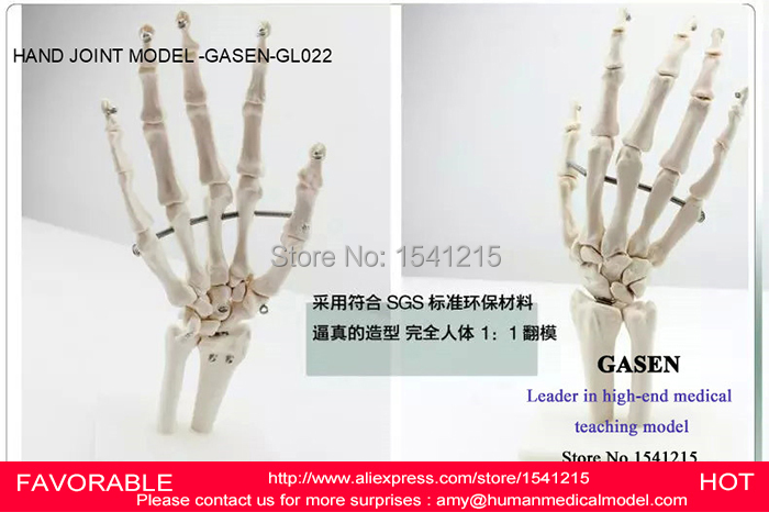 ФОТО HAND JOINT SKELETON MODEL HUMAN SKELETON MODEL VOLA PALM SKELETON MODEL,ARTICULATED HUMAN SKELETON HAND JOINT MODEL-GASEN-GL022