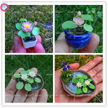 5pcs Mini Water Lily Seeds Handing Bonsai Lotus Flower Seeds Beautiful Aquatic Potted Plants 100% Germination Rate Fast shipping