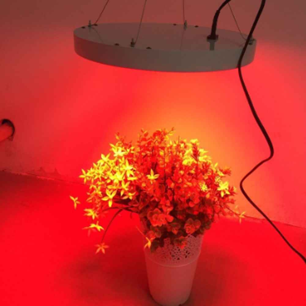 Pure Red Grow Light 50W Led Plant Grow Light 250 LEDs Growing Panel Lights Full Spectrum Plant Light for Flowering Blooming 4pcs kingled 1200w powerful full spectrum led grow light panel for plants flowering and growing led plant lights