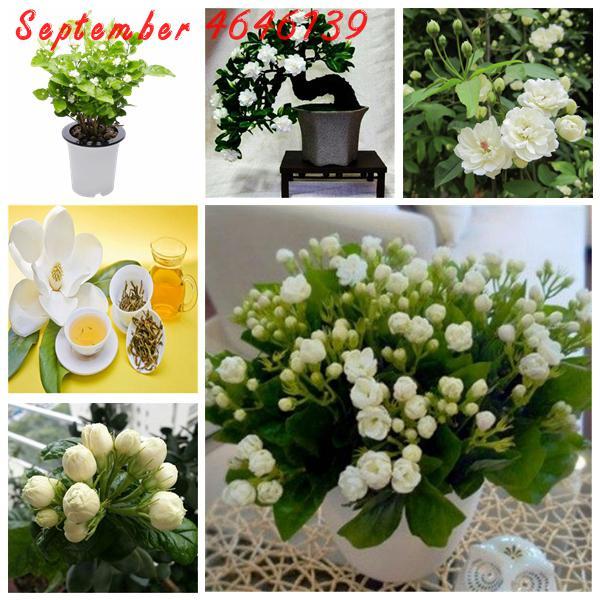 20//50 Pcs Garden Balcony Beautiful Bonsai Plants Tulip Bulbs Seeds WST 01