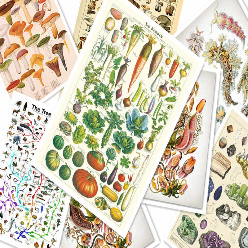 Vegetable Plant Animal Ccience Poster Retro Kraft Paper Poster Wall Stickers Wallpaper Painting Prints Art Room Decoration