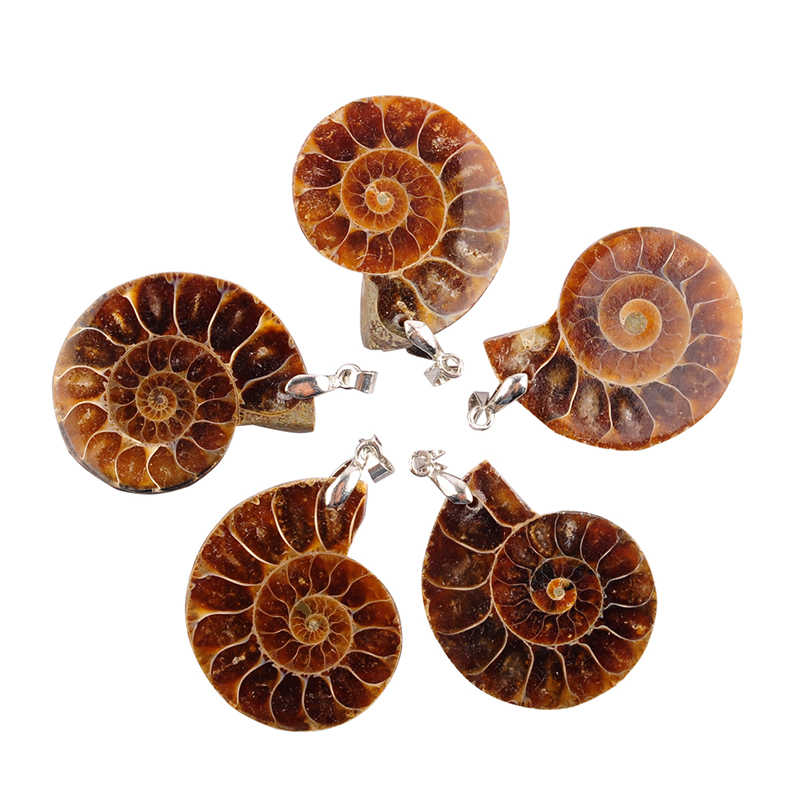 fashion jewelry Natural Ammonite Fossils Seashell Ocean Reliquiae Conch Exquisite Snail Shells Pendants For Necklace Men Women