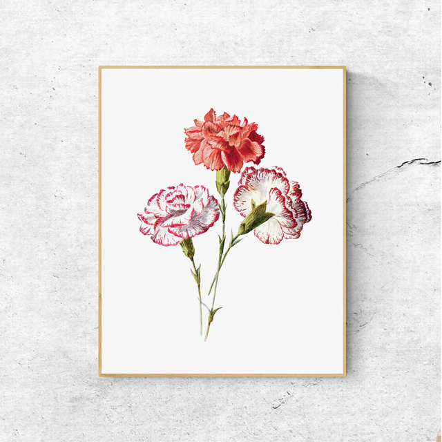 Vintage Flower Carnation Botanical Print Watercolor Print Red