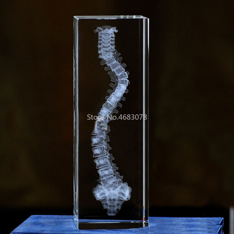 3D Stereoscopic Crystal Inner Carving Human Spine Model For Medical Teaching Supplies Or Ideal Gift 50x50x80mm