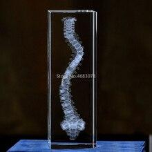 Modelo de escultura de cristal 3d estereoscópico, modelo de coluna humana para ensino de medicina ou presente ideal.