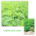 20 Seeds/Pack,Balcony Potted Plant Seed Perennial Herbs Astragalus Seed