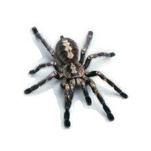 Car Universal 2019 Hot 3D PVC Sticker Lizard Scorpion Spider Cool Body Window Decal M8617