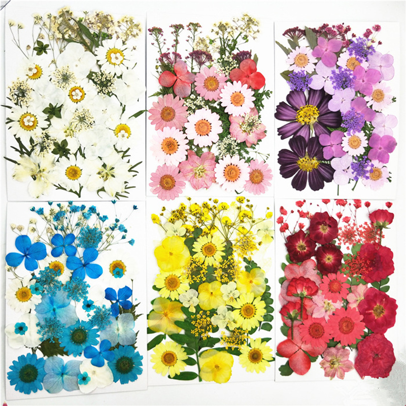 Small Dried Flowers Pressed Flowers DIY Preserved Flower Decoration Home Mini Bloemen(China)