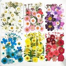 Małe suszone kwiaty sprasowane kwiaty DIY zachowane dekoracja kwiatowa Home Mini bloemen