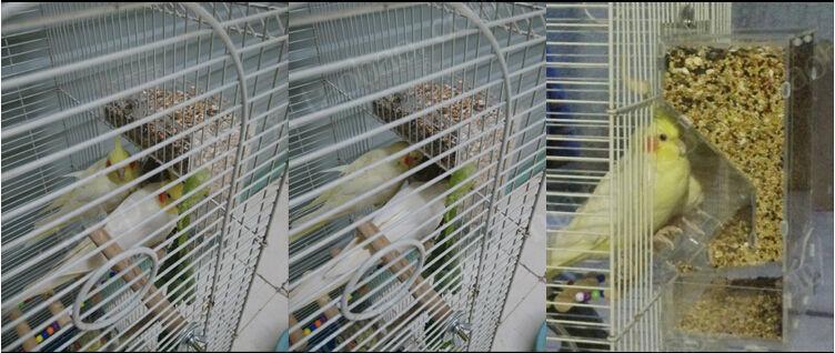 Semence rangée sans gâchis mangeoire pour oiseaux à double fente perroquet alimentation bol éleveur canari cockatiel finch coloré Munia nouvelle livraison gratuite