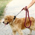 Promotion Sale Pet Supplies Spliced Color Dog Leads Adjustable Nylon Walking Training Dog Rope Traction Dog Harness Collar Leash