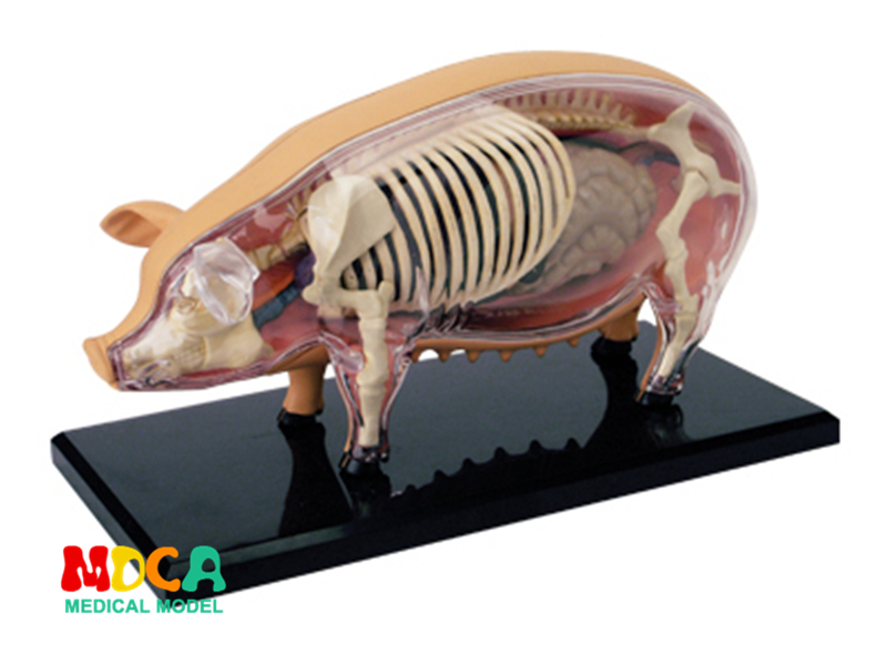 Pig 4d master puzzle Assembling toy Animal Biology organ anatomical model medical teaching model 4d master cat puzzle assembling toy animal biology organ anatomical model medical teaching skull skeleton model science toys