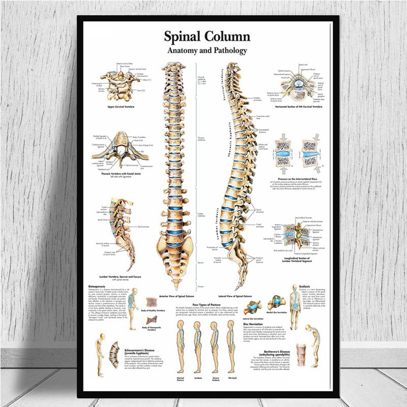 Z-1819 Human Anatomy of the Brain Anatomical Chart Body Custom Poster Art Decor