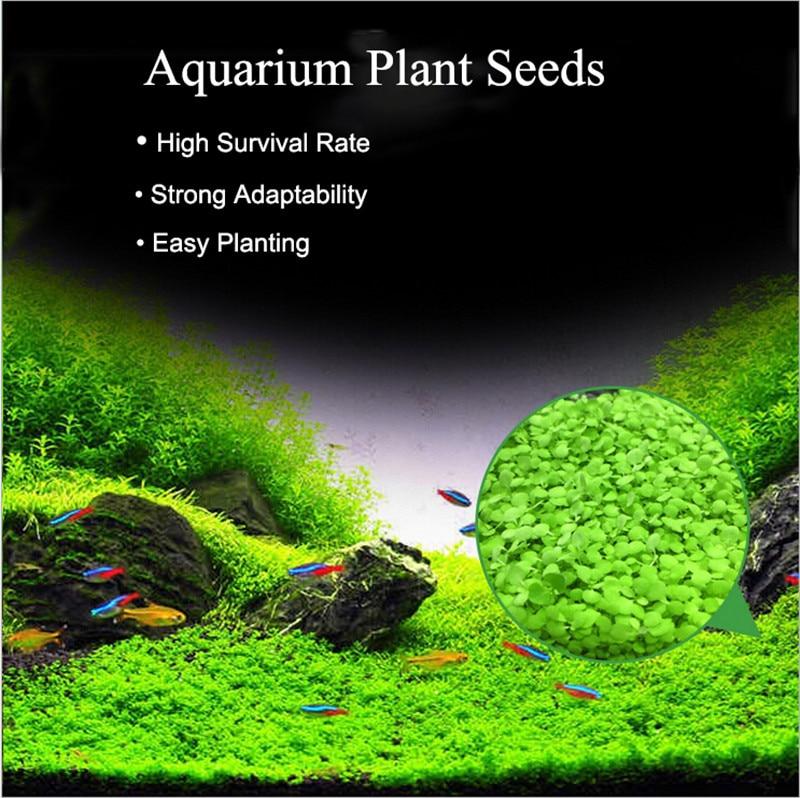 Water Grass Seed Aquarium Aquatic Plants Seeds Easy Planting Fish Tank Landscape Ornament Lawn Decor
