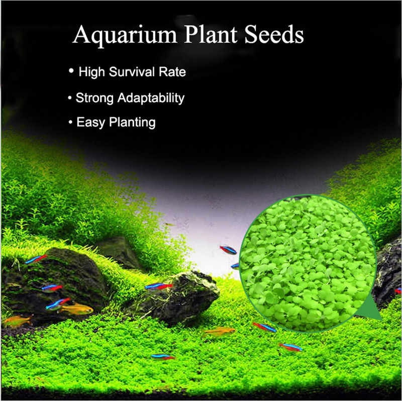 Aquarium Plants Seeds Aquatic Water Grass Seeds Glossostigma Hemianthus Callitrichoides Easy Planting Fish Tank Landscape Decor