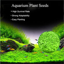 Aquarium Plants Seeds Aquatic Water Grass Seeds Glossostigma Hemianthus Callitrichoides Easy Planting Fish Tank Landscape Decor(China)