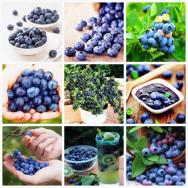100 Pcs/bag Blueberry Seeds Edible Organic Heirloom Fruit Seeds Dwarf Blueberry Bonsai Tree Potted Plant For Home Garden