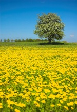 Laeacco Spring Flowers Field Tree Blue Sky Scenic  Photography Backgrounds Customized Photographic Backdrops For Photo Studio