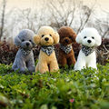 Free shipping 1PC Retail Life like Teddy Poodle Dogs Bichon Frise Plush Toy Triangular Scarf stuffed warm soft animals kids gift