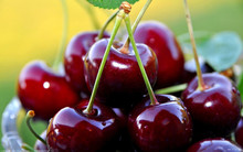 Delicious Sweet Cherry Tree seeds,Fruit Seed, 20pcs/pack