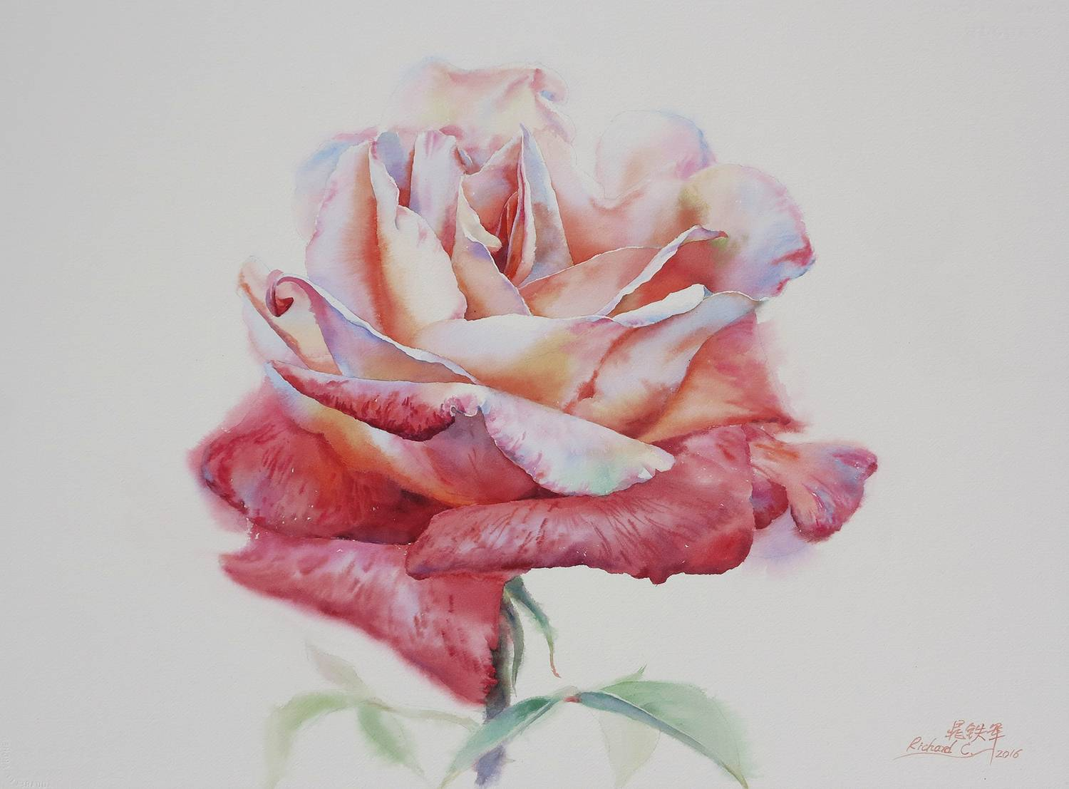 Chinese and Australia Artist Chao Tiejun's WorkTwo Tone Rose Watercolor Painting Wall Art Posters Picture Canvas Painting