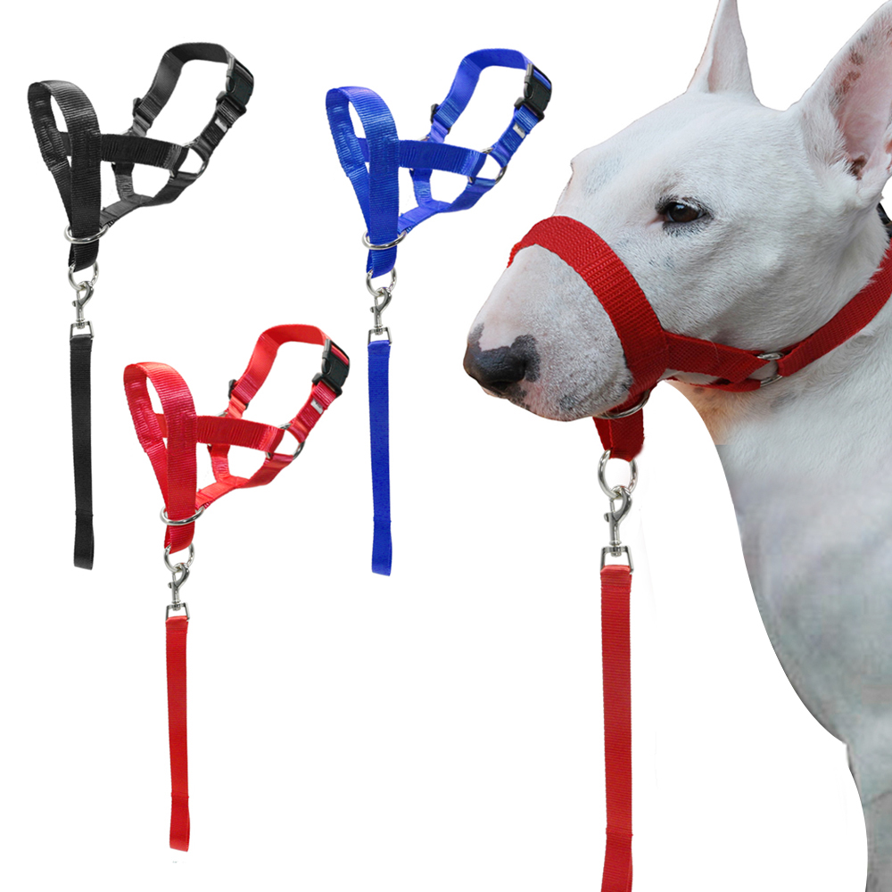 Training Halter Dog