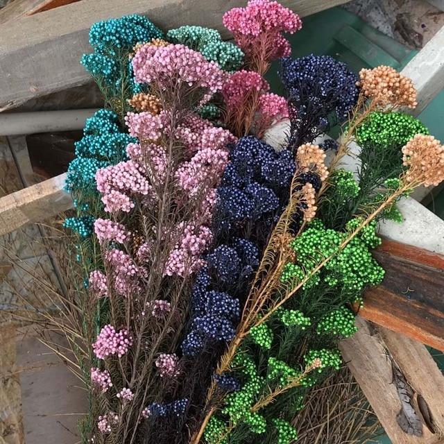 50g/40CM Natural Eternell Millet Flower