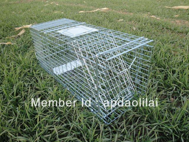 Humane Folding Cat Trap Cage - - dll trap
