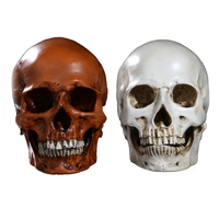 Artificial Split Human Head Skeleton Replica Resin Crafts Home Decoration Skull Figurine