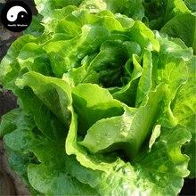 Buy Lettuce Vegetables Seeds 400pcs Plant Green Salad Vegetable Lactuca Sativa