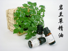 Guangdong Chongqing Haiti essential oil wholesale mall genuine imported Vetiver / Vetiver Essential Oil 10ml