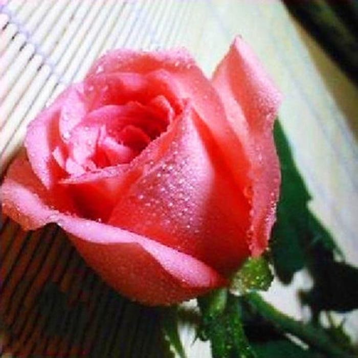 50 unids/bolsa arco iris flor hermosa rosa semilla semillas de Rose hogar A  005 en Bonsáis de Hogar y Jardín en AliExpress.com | Alibaba Group