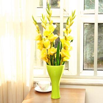 Aliexpress Buy 2 Pcsbsg Genuine Gladiolus Flower Ball Root