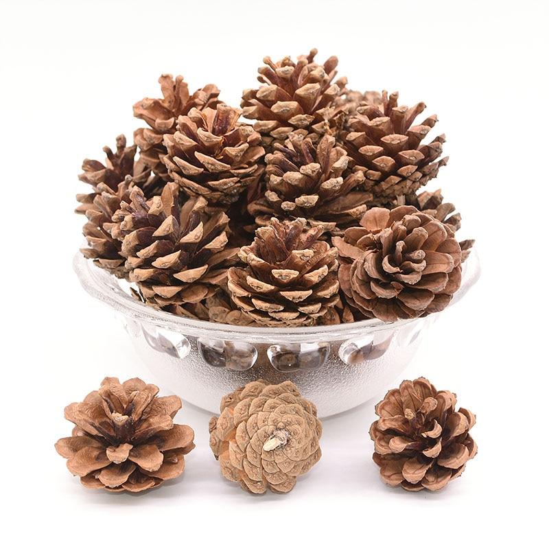 20PCS Natural Pine Cones Pinecones Decor Thanksgiving Christmas Decoration