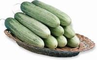 India Kasinda F1 Cucumber Seeds Fruit Vegetables Seeds (50 SEEDS)
