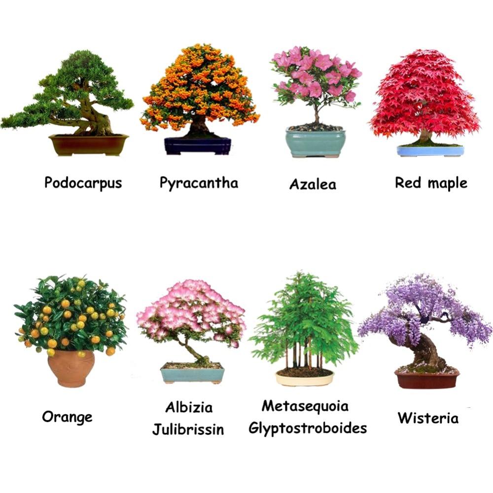 8 tipos de pacotes em vasos ornamentais belo jardim for Plantas ornamentales con sus nombres lamina