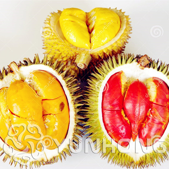 5 Pcs Durian Bonsai The King Of Fruit High-nutrition Home Rare True MINI Outdoor Tree Plant Germ Planting Funny Bonsai