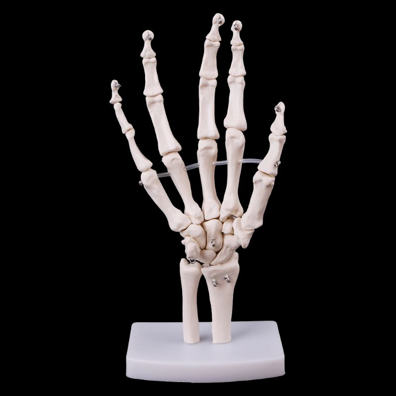 Hand Joint Anatomical Skeleton Model Human Medical Anatomy Study Tool Life Size 12 x 25cmHand Joint Anatomical Skeleton Model Human Medical Anatomy Study Tool Life Size 12 x 25cm