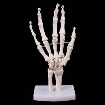 Human Hand Joint Model Anatomical Skeleton Model Human Medical Anatomy Study Tool Life Size 12 x 25cm - DISCOUNT ITEM  24% OFF All Category